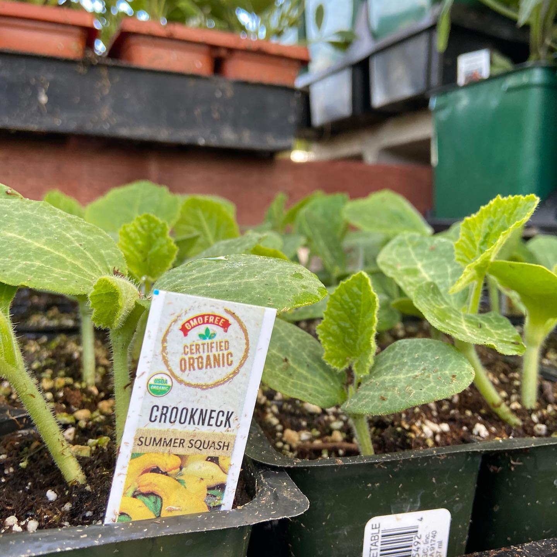 Plant at Bishop nursery